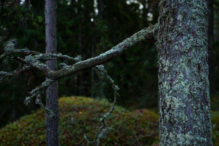 Metsän vihreät